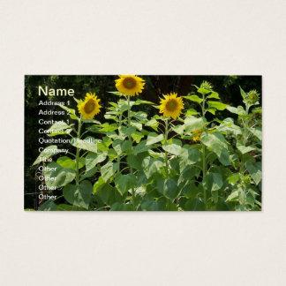 SunFlower Sun Flower Garden Business profile card