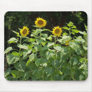 sunflower sun flower garden mousepad photo art