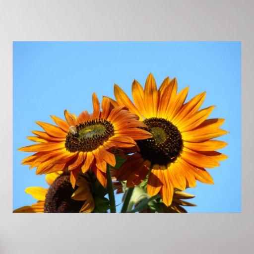 SUNFLOWER Sun Flowers Art Prints Framed Art Posters