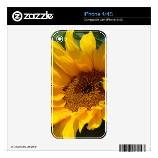 Sunflower Sun iPhone 4 Skins