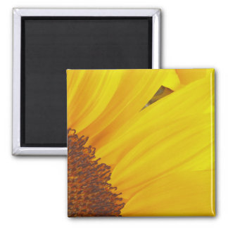 Sunflower Sun Magnet
