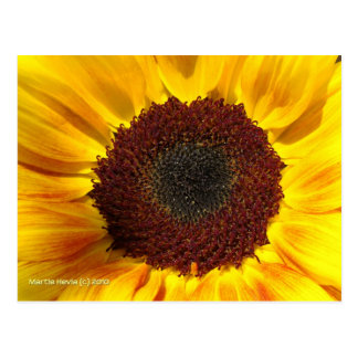 Sunflower Sun - Postcard
