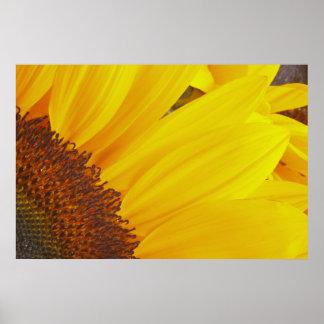 Sunflower Sun Poster