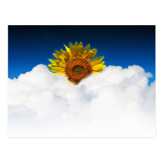 Sunflower Sunrise Postcard
