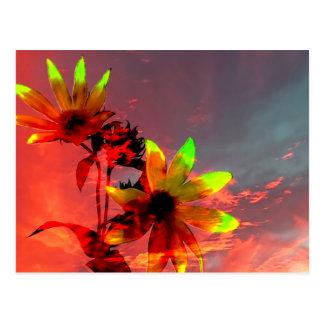 Sunflower Sunset Photo Postcard