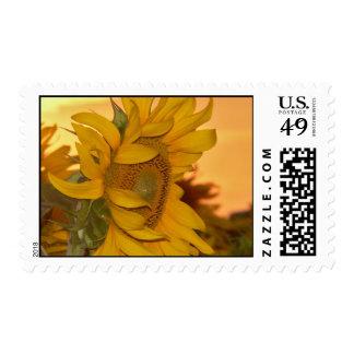 Sunflower Sunset Postage