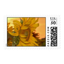 Sunflower Sunset Postage