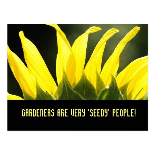 Sunflower sunshine postcard