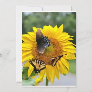 Sunflower Swallowtails Holiday Card