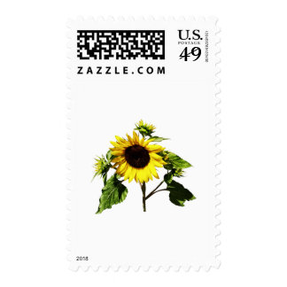 Sunflower Taking a Bow Postage