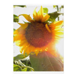 Sunflower Thank You Personalized Announcement