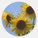 Sunflower Trip, S Cyr Sticker