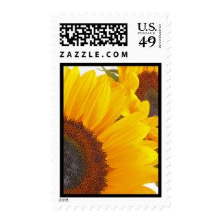 Sunflower Triplettes Stamp