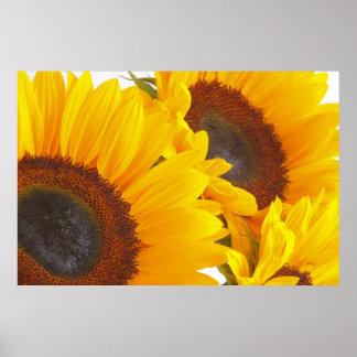 Sunflower Triplettes Poster