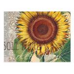 Sunflower Vintage Damask Wallpaper Collage Postcard