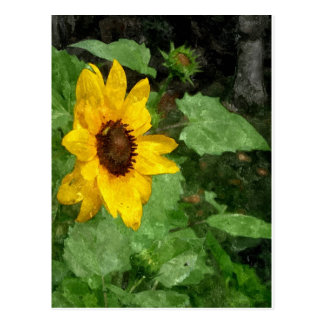 Sunflower Watercolor Postcard