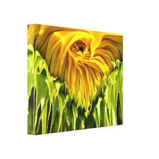 Sunflower Whirl Drip Canvas Print