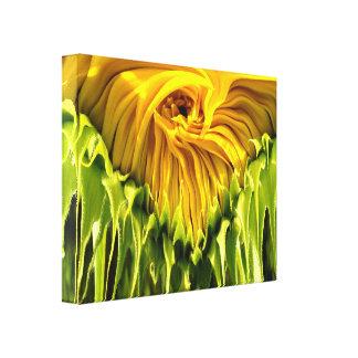 Sunflower Whirl Drip Canvas Print
