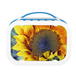 Sunflower with a Water Droplet Lunch Box