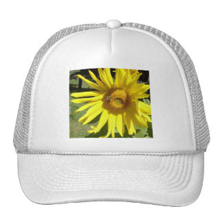 Sunflower with Bee Hat