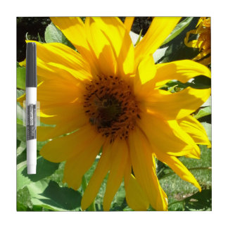 Sunflower with Bees Dry Erase Whiteboards