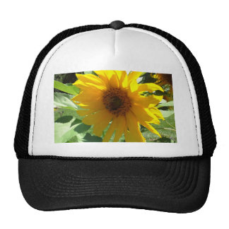 Sunflower with Bees Trucker Hat