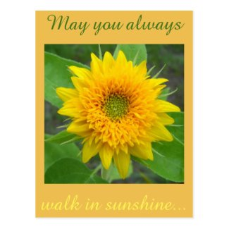Sunflower with inspiring message postcard