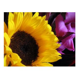Sunflower with Purple Iris Postcard