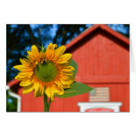 Sunflower With Red Barn Greeting Card