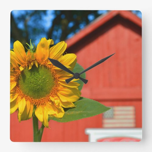 Sunflower With Red Barn Square Wall Clock