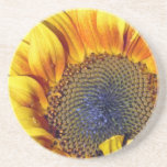 Sunflower with water droplets beverage coasters