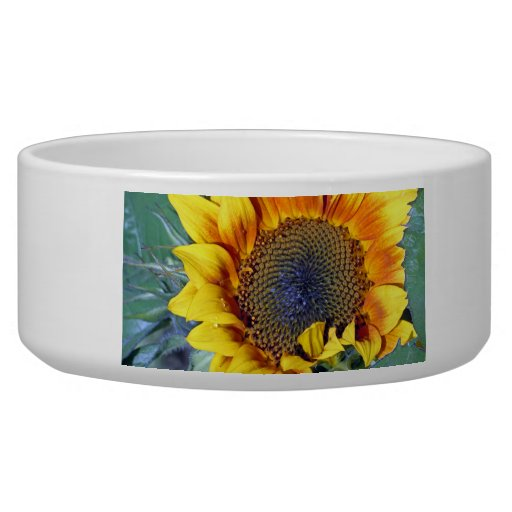 Sunflower with water droplets dog bowl