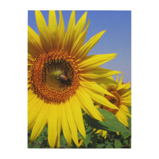 Sunflower Wood Canvas