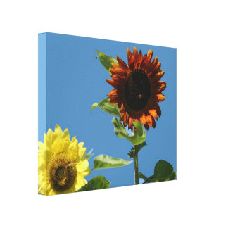 Sunflower Wrapped Canvas Horizontal yellow, brown