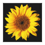Sunflower Yellow on Black - Customized Sun Flowers Canvas Print