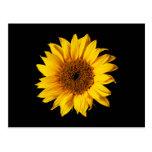Sunflower Yellow on Black - Customized Sun Flowers Postcard