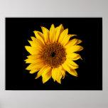 Sunflower Yellow on Black - Customized Sun Flowers Poster