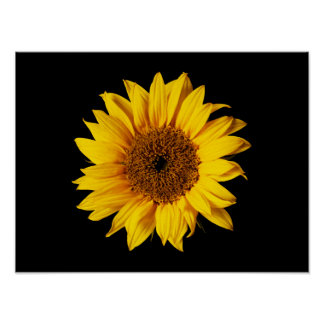 Sunflower Yellow on Black - Customized Sun Flowers Poster