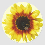 Sunflower yellow Orange with Bumble Bee and Pollen Classic Round Sticker