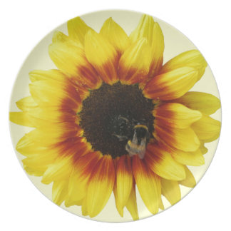 Sunflower yellow Orange with Bumble Bee and Pollen Dinner Plate