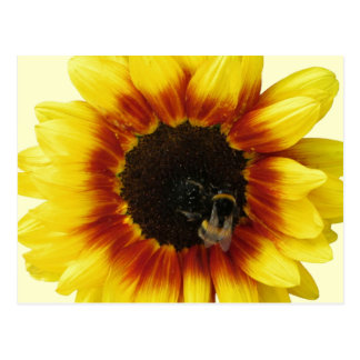 Sunflower yellow Orange with Bumble Bee and Pollen Postcard