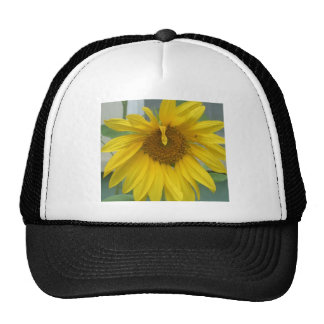 Sunflower yellow trucker hat