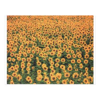 sunflowergrid postcard