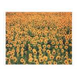 sunflowergrid tarjetas postales