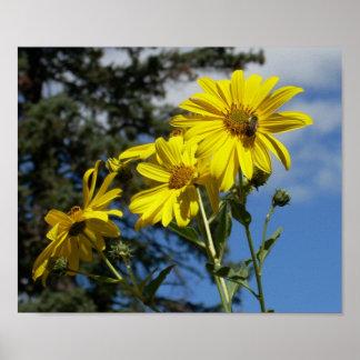 sunflowernbumblebee poster