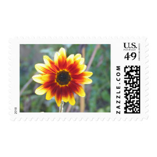 Sunflowers 2008 stamps