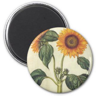 Sunflowers 2 Inch Round Magnet