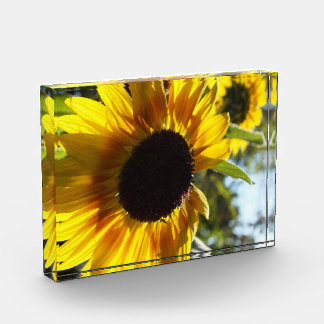 Sunflowers: Alive and Free Photo in Acrylic Award