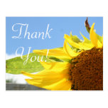 Sunflowers and Blue Skies Post Cards