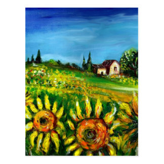 SUNFLOWERS AND COUNTRYSIDE IN TUSCANY POSTCARDS